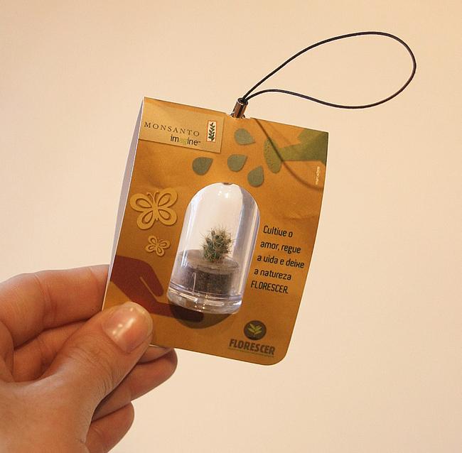 mini planta 1